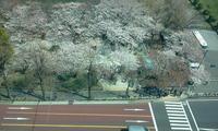 2011-04-06 12.48.30.jpg